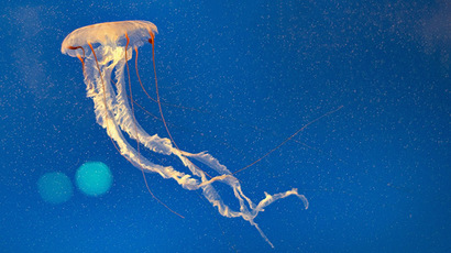 'Endless gravity': Out-of-this-world VIDEO shows jellyfish fairy dance
