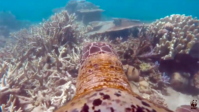 GoPro turtle inspires people to save Great Barrier Reef in mesmerizing footage (VIDEO)