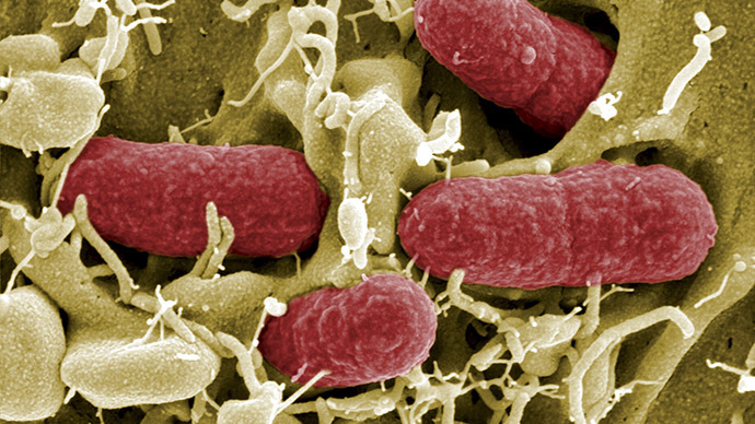 Scientists genetically modify bacteria to detect & treat intestinal diseases, incl cancer