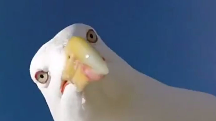 Seagull steals GoPro camera, takes cool selfie (VIDEO)