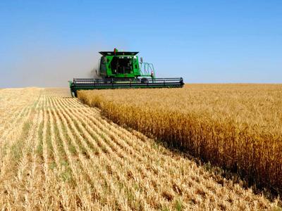 Black Earth Farming posts 1Q 2011 net loss of 448.1 million roubles