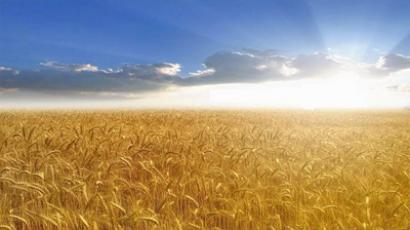 Russian agriculture from the global perspective