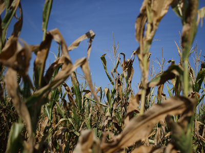 Global food prices rise due to extreme weather