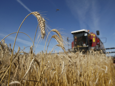 Russia might abolish cereal import duties in two months