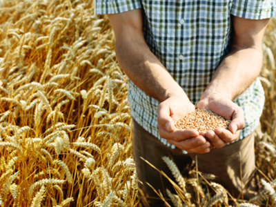 Grain controls on horizon as new Chinese agriculture links signed off