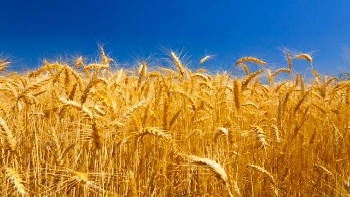 Back in the grain market
