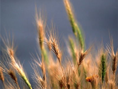 No need to fear grain deficit because of weather