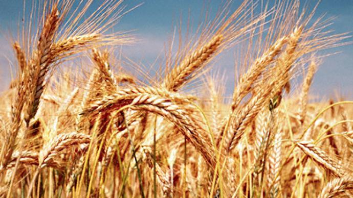 Getting back on the global grain wagon