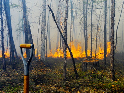 $20 mln cigarette starts forest fire