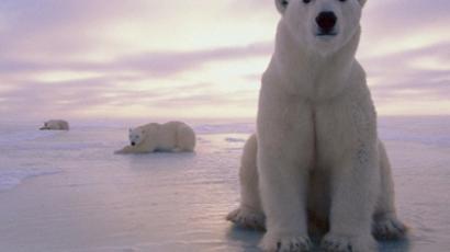 Norwegian wok: Thai community thrives on ice-cold Spitsbergen