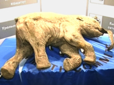 Baby mammoth will 'live' 500 years