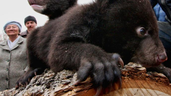 Furry orphans: baby bears need home