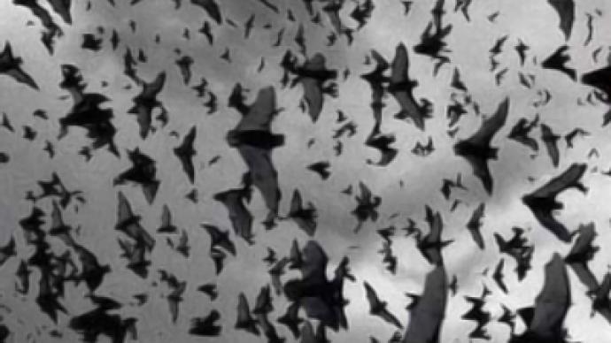 Depressed bats rain on Ukrainian city