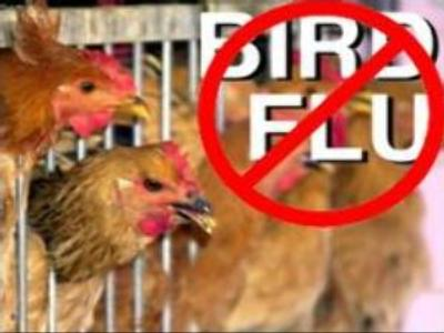 Bird flu in Moscow region contained