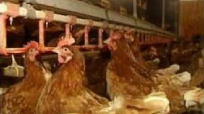 Bird Flu outbreaks in GB and Japan