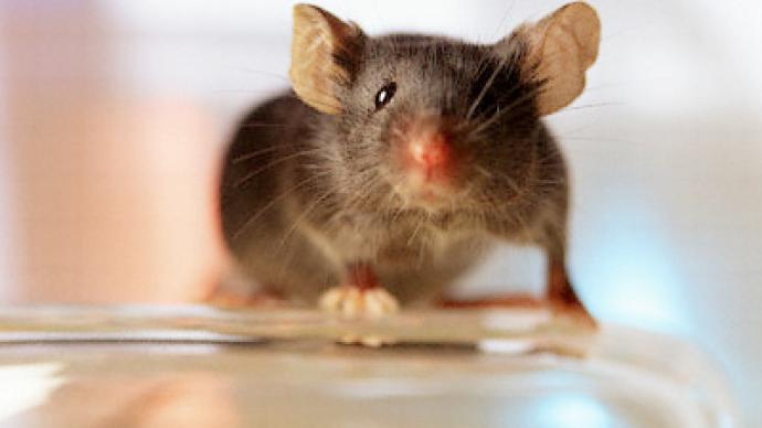 Bomb-detecting mice may foil future terrorists