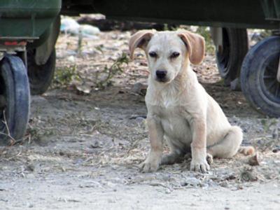 Brits dump pets in desperation