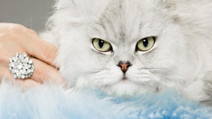 grey tabby cat soft toy