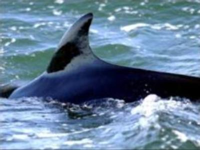 Commercial whaling ban still in force