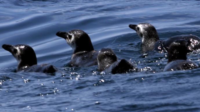 Deaths of hundreds of penguins baffles Brazilian scientists