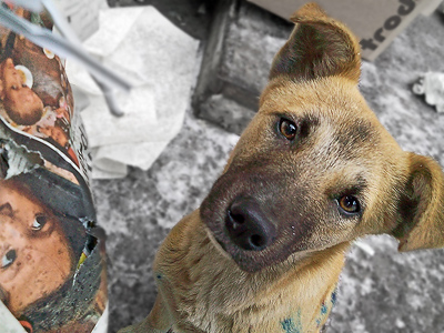 Russian region signs death sentence for 16,500 dogs