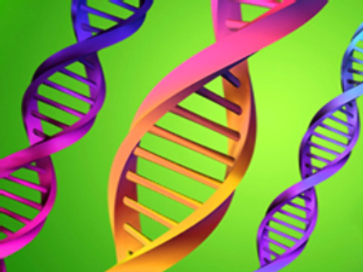 Duma says DNA database would help police