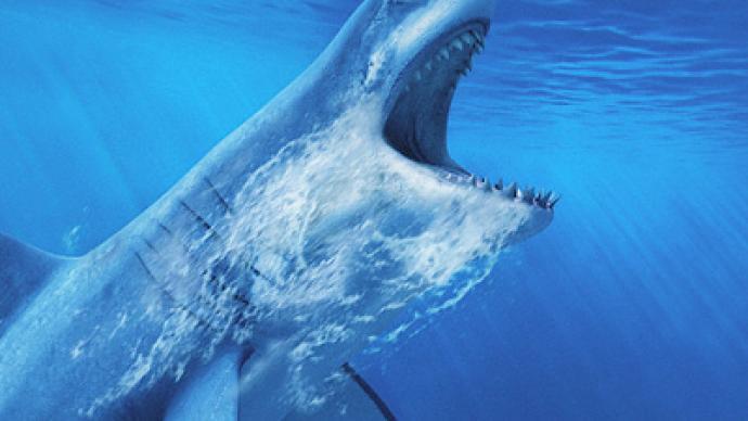 Egypt pays ex-navy captain $50,000 for arm eaten by shark