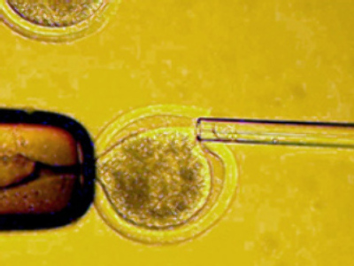 First GM human embryo raises fears of designer babies