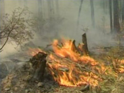 Forest fires break out in eastern Siberia