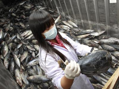 Fukushima fish carrying 258 times the 'safe' level of radiation