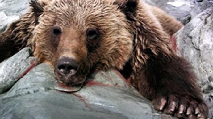 Desperate gamekeeper takes his life after killing bear