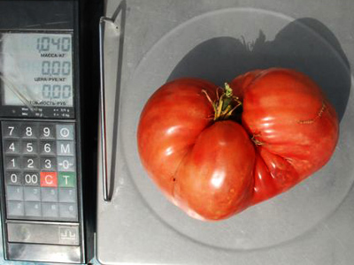 Bearing fruit, literally: Giant tomato wins farmer a car