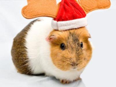 Santa shortage hits Sweden