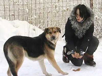 Yakutian Hachiko rejects human help