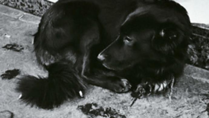 Activists react to the brutal shooting of homeless dogs