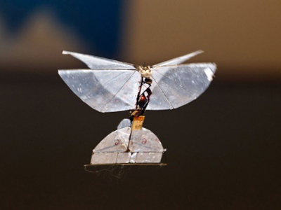 Spy-Butterfly: Israel developing insect drone for indoor surveillance