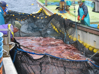 'Fukushima fish ends in garbage': Radioactive fears blight Japan's seafood industry