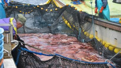 Fukushima fish contamination raises fears of ongoing radiation leak