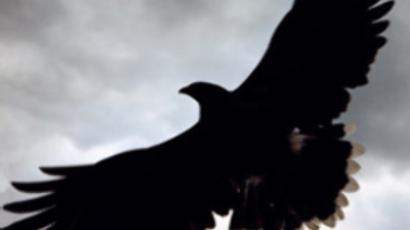 Oil slick kills hundreds of birds