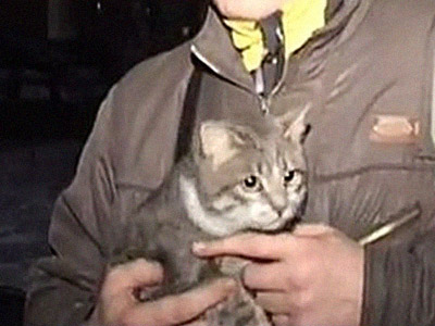 Cat-astrophe averted: Social network saves trapped cat