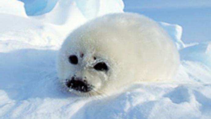 Licence to kill – Scottish seals on death row