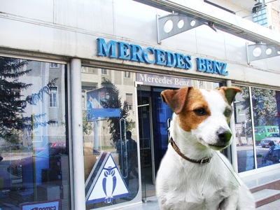 Jack Russell Terrier vs. Mercedes Benz Moscow