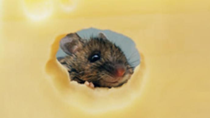Mice nibble through Parmesan worth 800,000 euros