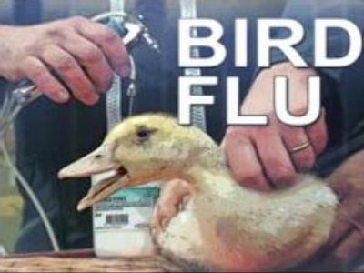 Moldova bans import of Russian and Hungarian poultry because of bird flu