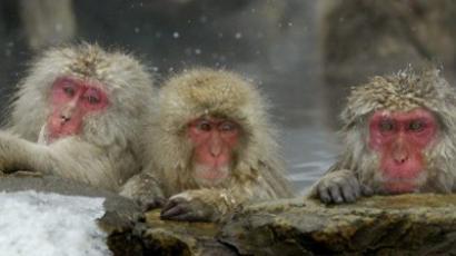 'Criminal event' at Fukushima calls for deeper investigation