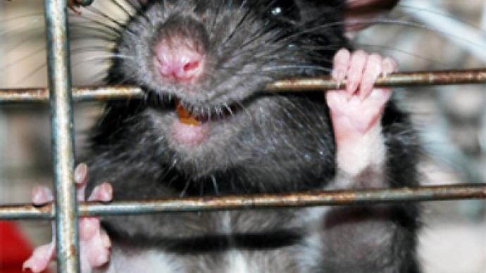 Monster rat attacks babies in hospital