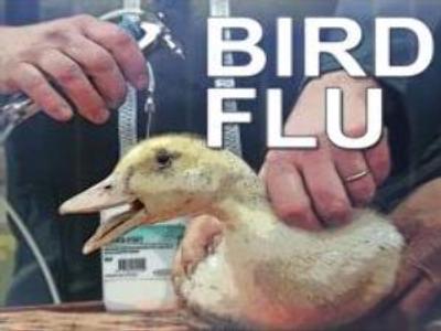 New bird flu outbreak registered in Turkey