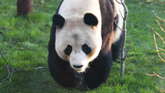 How much can a panda bear? BBC in Twitstorm
