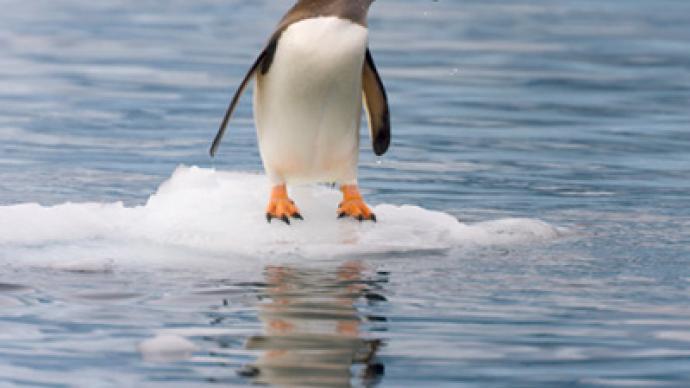 Stark penguin paradise