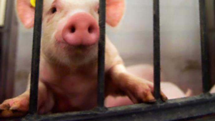 Pentagon accused of pig victimization